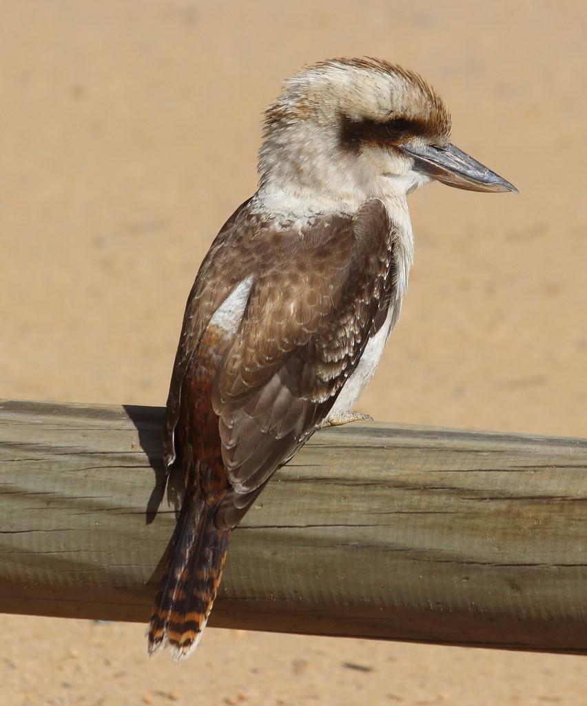 """""""Bird on a Post""""... by tellefella"""