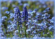 6th May 2016 - Shades of Blue.