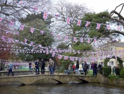 7th May 2016 - May Day - Bourton on the Water