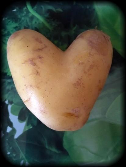 Love potato! by chris17
