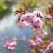 Blossom Indulgence by dorsethelen