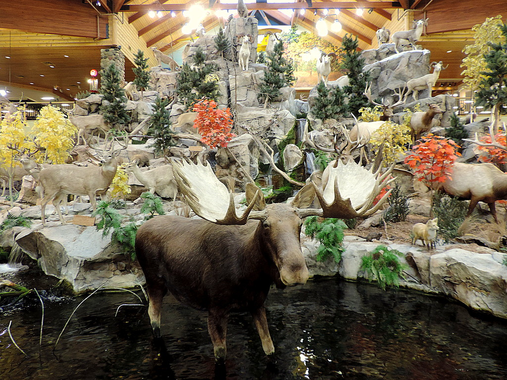 Mark another Cabelas off our list! by homeschoolmom