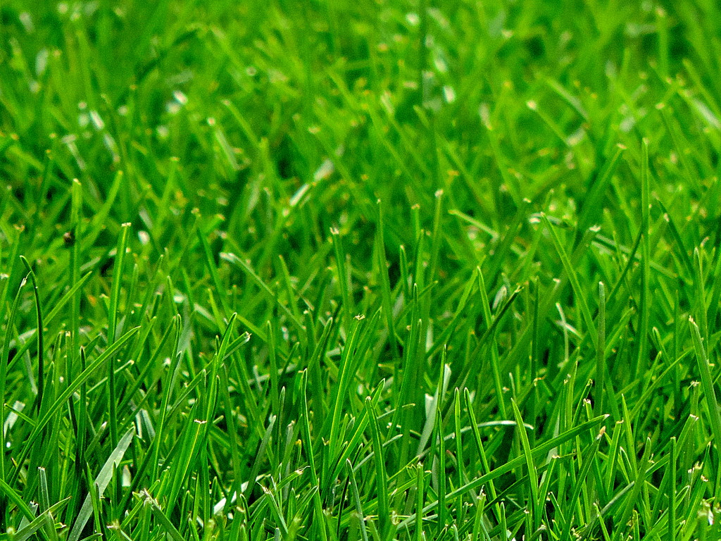 Oh, I do miss real grass and dirt by homeschoolmom