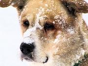 6th Dec 2010 - Snow dog.