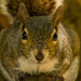 Squirrel in your face! by rickster549
