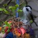 A Chickadee gathering nesting material by berelaxed
