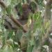 leafy hideaway by koalagardens