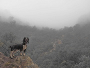 9th May 2016 - Wet dog in fog
