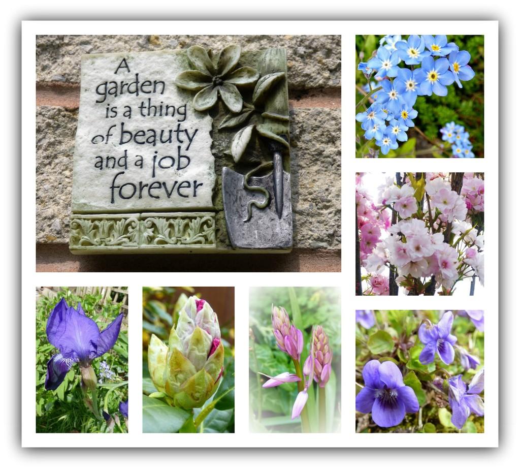 My Garden  by beryl