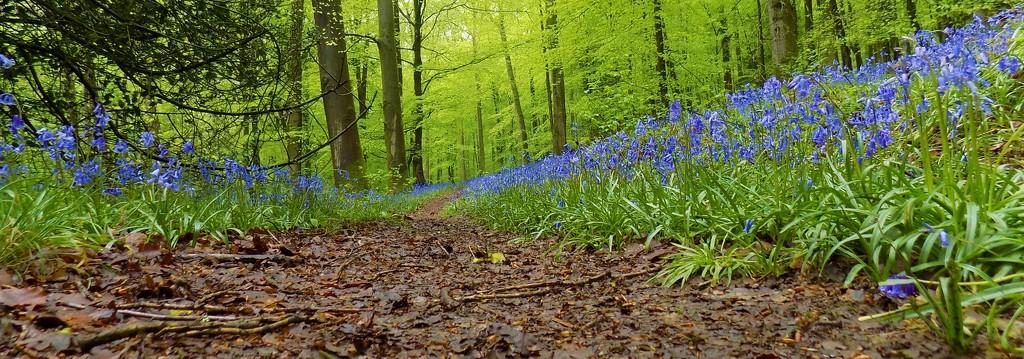 The path by flowerfairyann