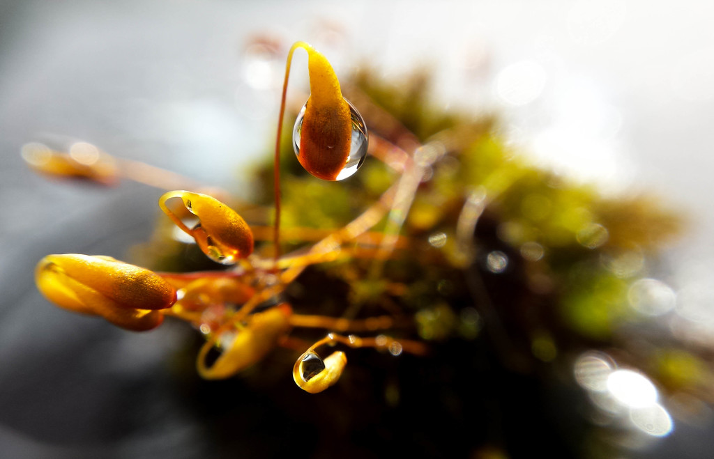10/05/16 Watery moss by m2016
