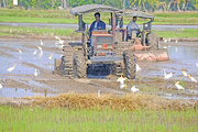 9th May 2016 - Power tilling the paddy