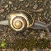 Snail with beautiful baggage by helenhall