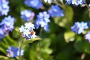 8th May 2016 - Lady Bug