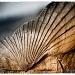 Fossil by pixelchix