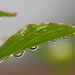 Raindrops by tosee