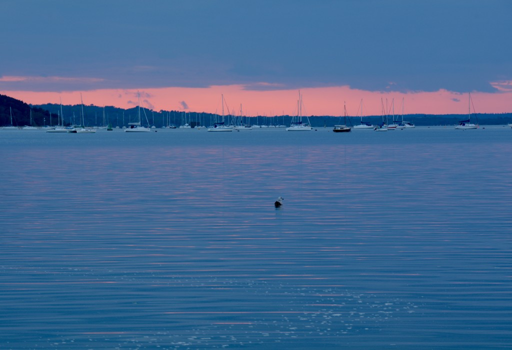 Blue with a hint of pink by mandapanda1971
