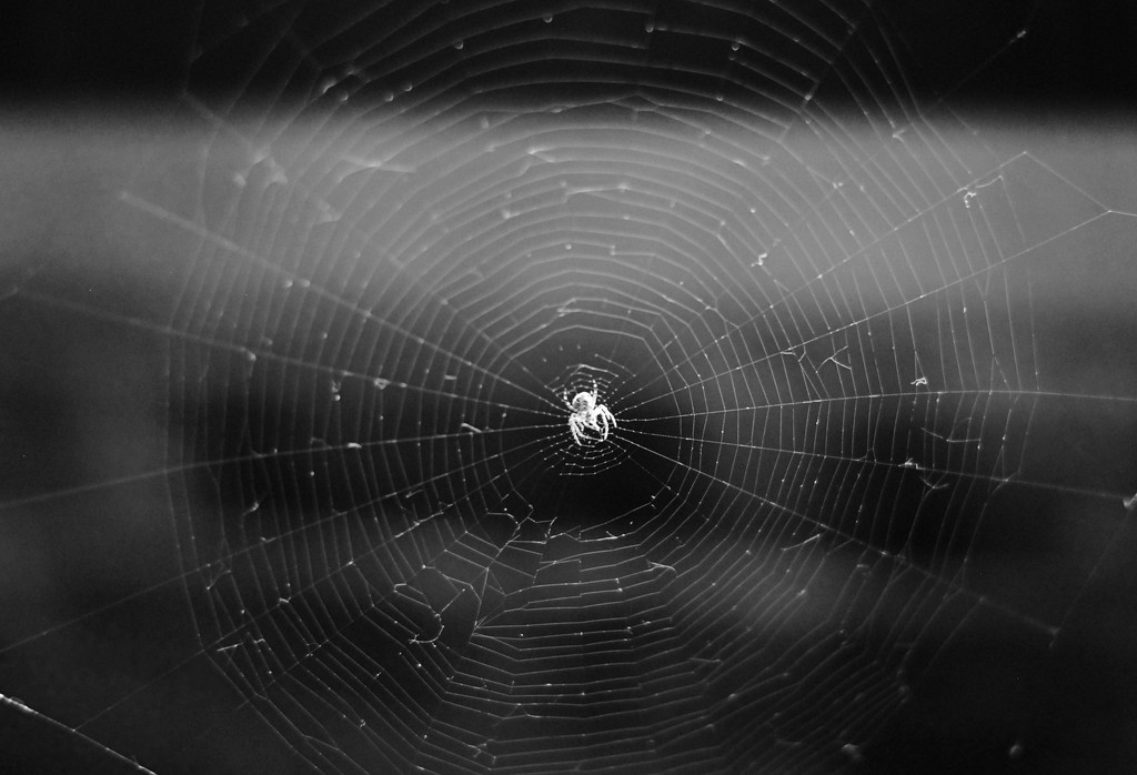Spider's web by mandapanda1971