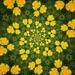 Dandelion Kaleidoscope by jocasta
