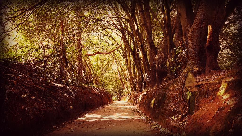 Through the Trees by iowsara