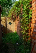 13th May 2016 - Secret garden