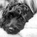 Dog Tired by dorsethelen