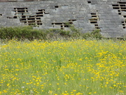 15th May 2016 - Buttercups and dilapidation