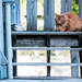 Cat on a Blue Stoop by tosee