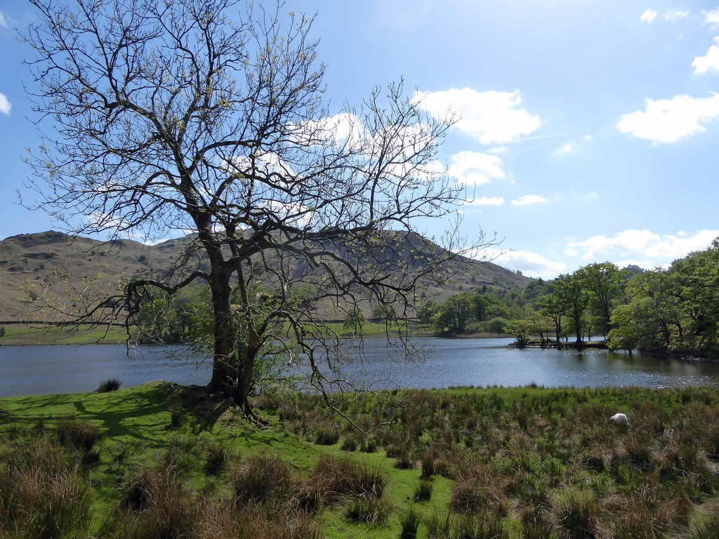 Rydal Water by cmp