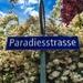 Paradise street.