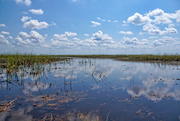 18th May 2016 - Everglades