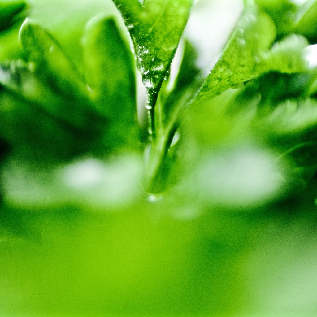 Parsley  by pistache