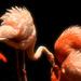 The Ballet   by joysfocus