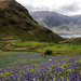 Rannerdale bluebells by inthecloud5