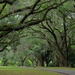 Avenue of Oaks, Charles Towne Landing State Historic Site, Charleston, SC by congaree