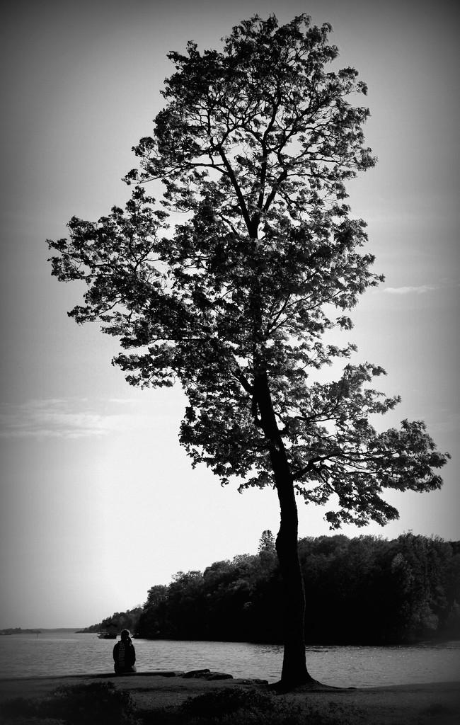 Solitude by susale