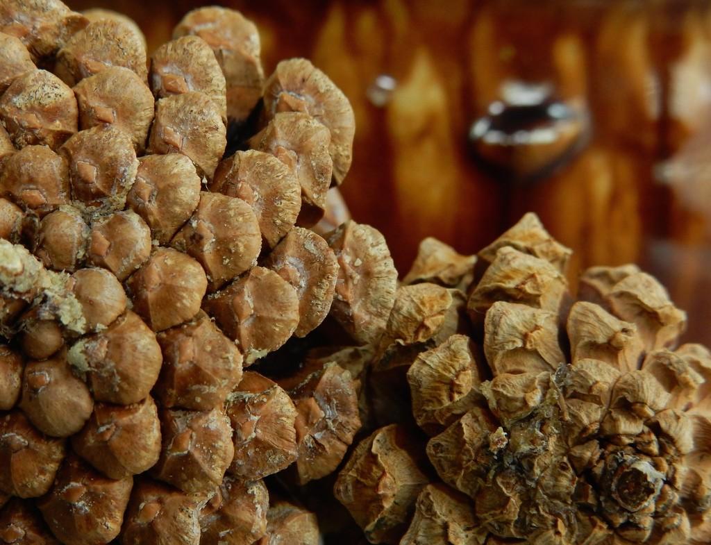 Pine Cones by mcsiegle