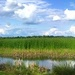 Marsh and wetlands near the Ashley River, Charleston, SC by congaree