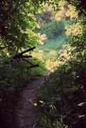 23rd May 2016 - Enchanted path