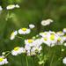 Spring by hjbenson