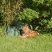 Tigger enjoying the sun