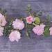Roses - digital art