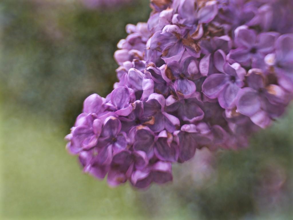 Purple-icious by pistache