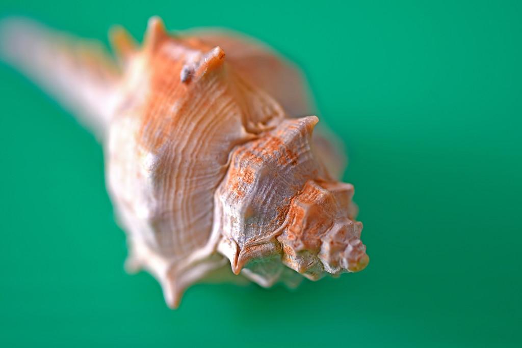 Sea-Shell1 by ianjb21