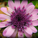 Flower of flowers by alia_801