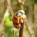 ladybird twizzle  by helenhall
