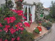 28th May 2016 - Rose garden