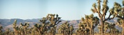 25th Sep 2010 - Desert Forest