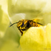 Super Hero Snap Dragon Bee by stefneyhart