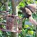 Big Birds Don't Frighten Me. by wendyfrost
